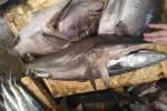 peche-sharkcitizen3